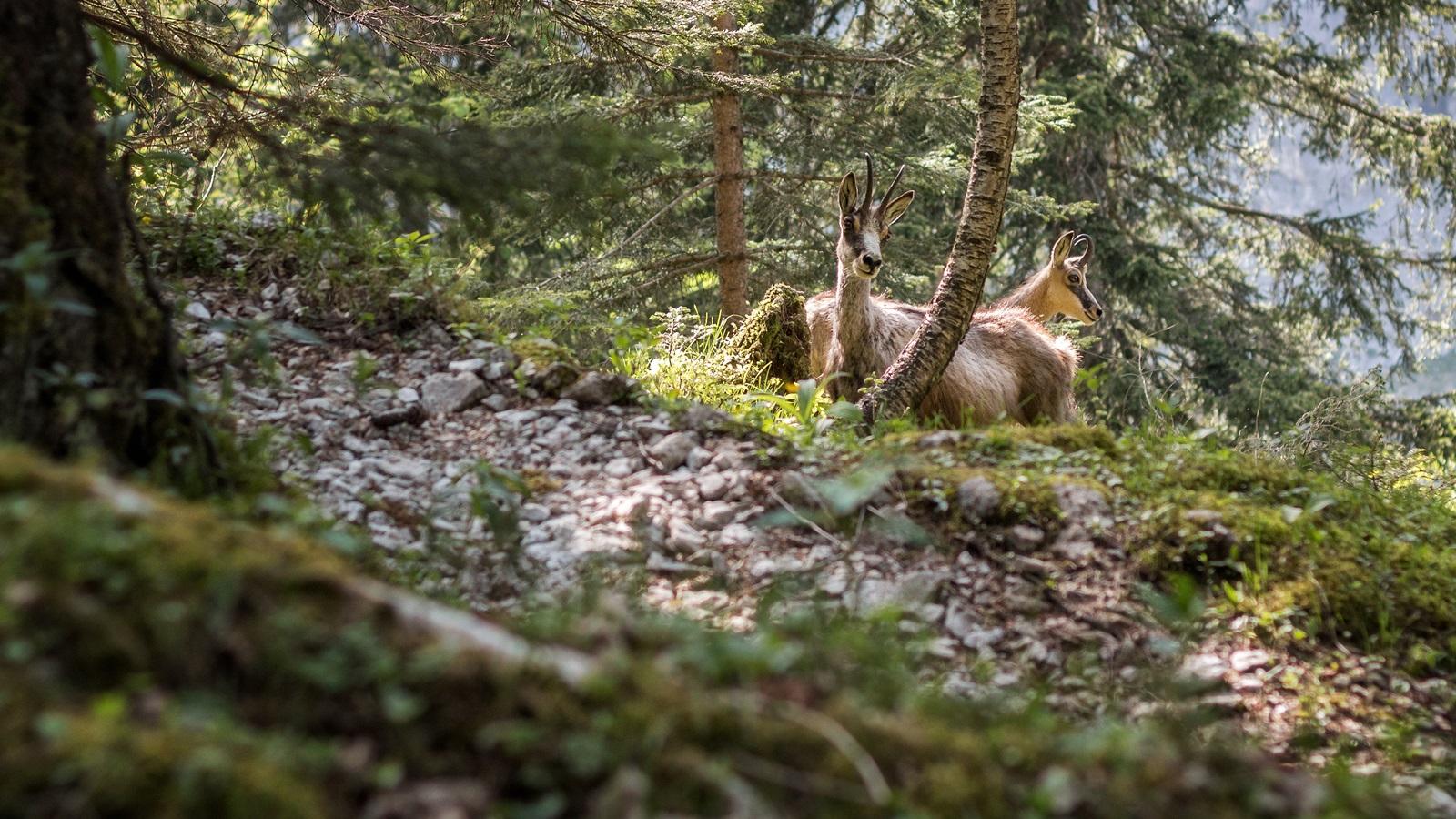 Garmisch_14